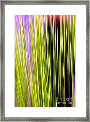 Dasylirion Velocity Framed Print by Douglas Taylor