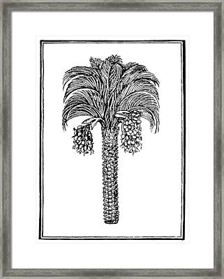 Date Palm, 1579 Framed Print by Granger