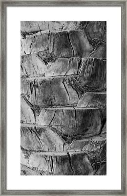 Date Palm Bark Framed Print