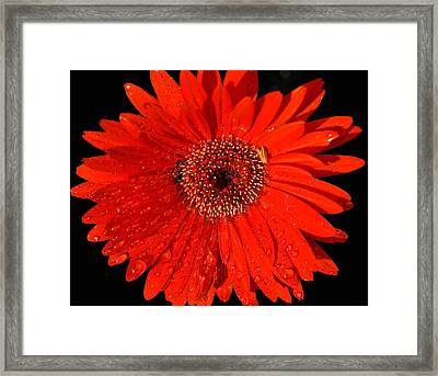 Datta What Have We Given Framed Print