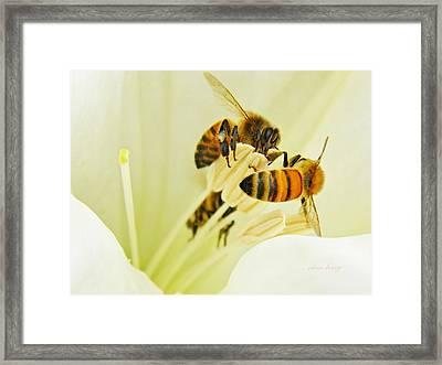 Honeybees On Moonflower Framed Print by Chris Berry