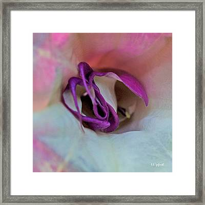 Datura Squared Framed Print by TK Goforth