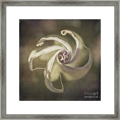 Datura Star Framed Print by Terry Rowe
