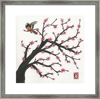 Daurian Redstart Framed Print
