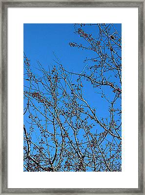 Dave's Blue Sky Framed Print by Joseph Yarbrough