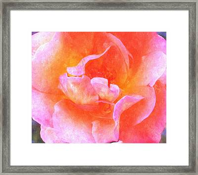 David Austins  Old World Rose Framed Print by Rosemarie E Seppala
