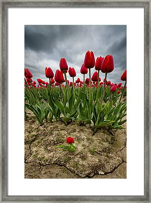 David Framed Print by Ryan Manuel
