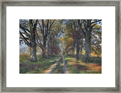 Daviess County Lane Framed Print