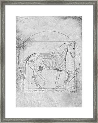 Da Vinci Horse Piaffe Grayscale Framed Print by Catherine Twomey