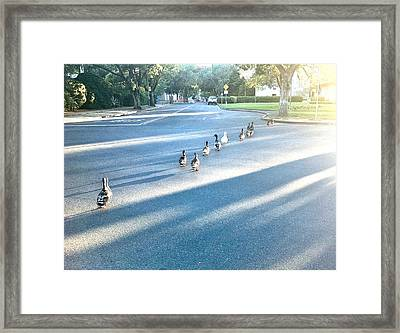 Davis Ducks Framed Print by Cadence Spalding