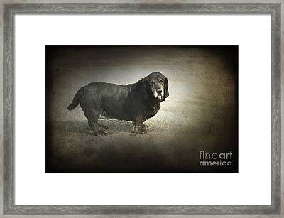 Dawg Framed Print by The Stone Age