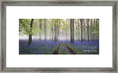 Dawn Bluebell Wood Panoramic Framed Print