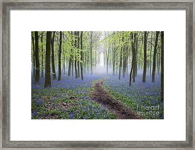 Dawn Bluebell Wood Framed Print by Tim Gainey