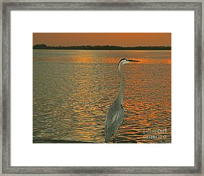 Framed Print featuring the photograph Dawn Greets A Blue Heron by Joan McArthur