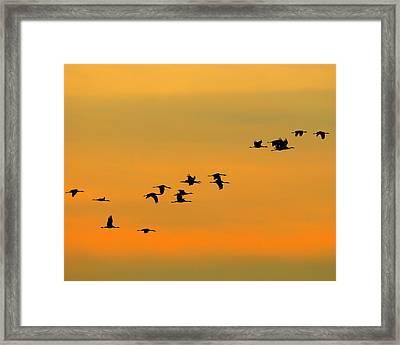 Dawn Migration Framed Print