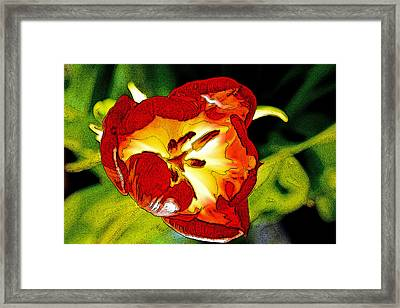 Dawn Of A Tulip Framed Print