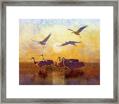 Dawn On The Bosque Sandhill Cranes Framed Print by R christopher Vest