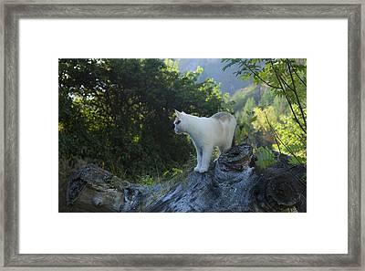 Dawn Patrol Framed Print by Theresa Tahara