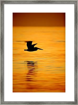Dawn Pelican  C6j8211 Framed Print