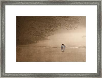 Dawn Swan Framed Print by Ian Merton