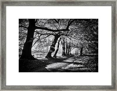 Dawn Tree Light  Framed Print by Tim Gainey