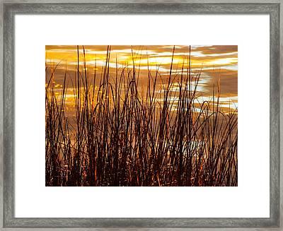 Dawn's Early Light Framed Print by Karen Wiles
