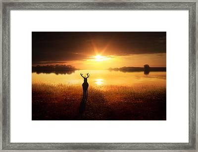 Dawn's Golden Light Framed Print