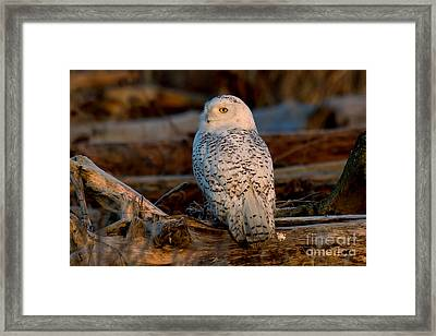 Dawns Light Framed Print