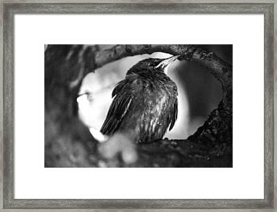 Framed Print featuring the photograph Dax's Bird by Tarey Potter