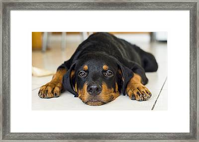 Day Dreaming Framed Print by Aged Pixel