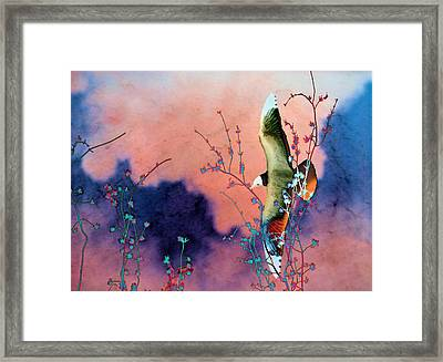 Day Dreaming Framed Print by Jan Amiss Photography