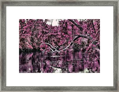 Day Dreaming Framed Print by Michelle and John Ressler