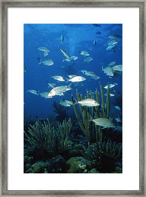 Day In The Ocean Framed Print by Retro Images Archive
