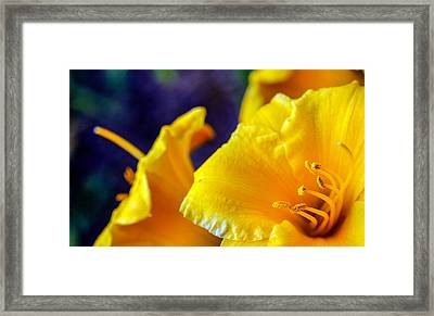 Framed Print featuring the photograph Day Lilies by Cathy Donohoue