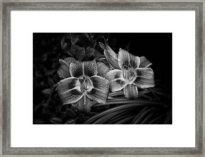 Framed Print featuring the photograph Day Lilies Number 4 by Ben Shields