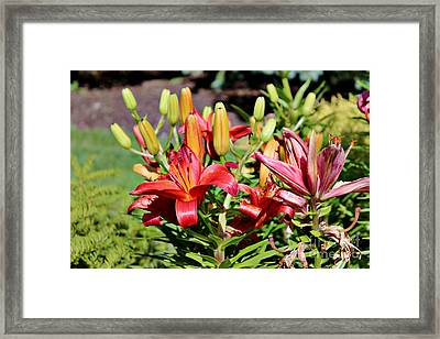 Day Lillies In The Garden Framed Print