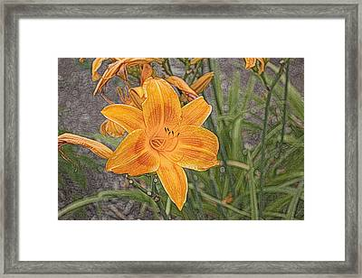 Framed Print featuring the photograph Day Lilly - Hemerocalle by Nature and Wildlife Photography