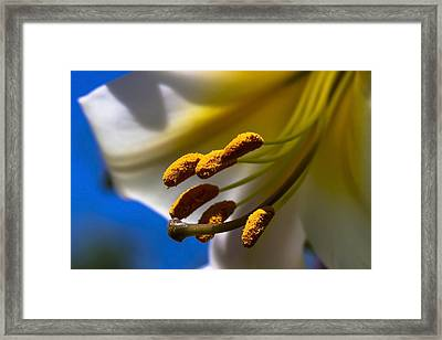 Day Lilly Macro With Sky Background Framed Print by Sven Brogren