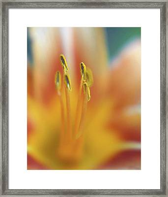 Day Lily Abstract Framed Print by Anna Miller