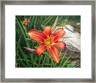 Day Lily Framed Print by Bob  George