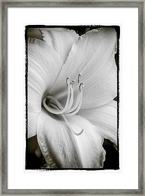 Framed Print featuring the photograph Day Lily  by Craig Perry-Ollila