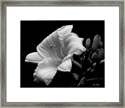 Framed Print featuring the photograph One Day Lily  by James C Thomas