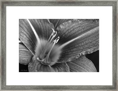 Day Lily In Black And White Framed Print