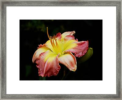 Framed Print featuring the photograph Day Lily by Linda Brown