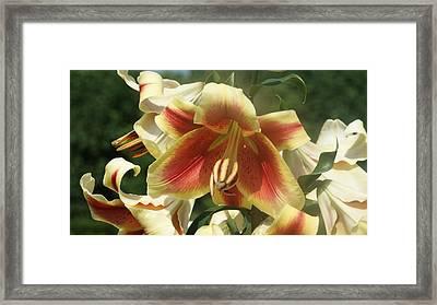 Day Lily Orange White...   # Framed Print by Rob Luzier