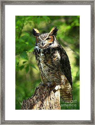 Daybreak's Gentle Caress Majestic Great Horned Owl In The Forest  Framed Print by Inspired Nature Photography Fine Art Photography