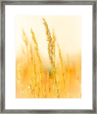 Daydream Framed Print by Bob Orsillo