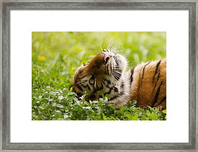 Daydreamer Framed Print by Ashley Vincent