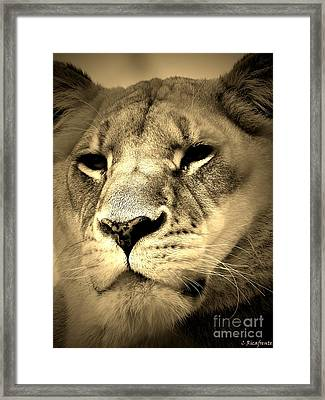 Daydreaming Framed Print by Christy Ricafrente