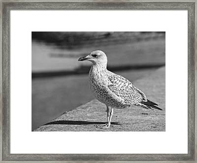 Daydreaming In Black And White Framed Print by Gill Billington